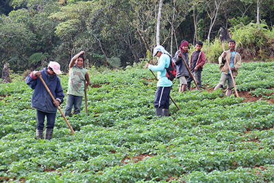 Kartotoffelanbau auf den Philippinen. Bildnachweis: Michael Kraft/TU Braunschweig