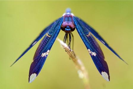 Libellen: Bioindikatoren und Inspiration für die Forschung - TU ...