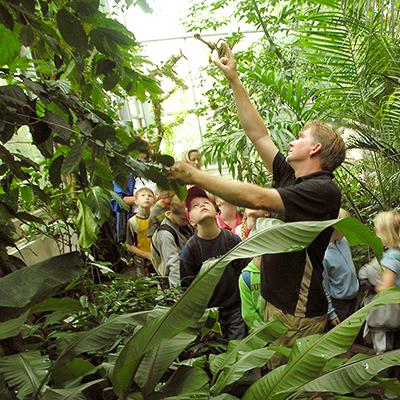 In der Grünen Schule im Botanischen Garten können Schulklassen botanische Themen bearbeiten, die den Biologie- und Sachunterricht ergänzen und bereichern.