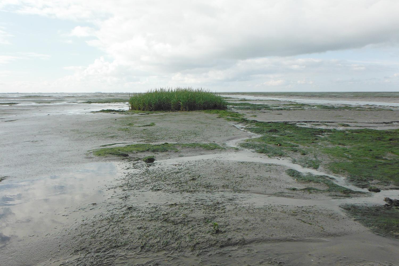 Forschungsprojekt SeaArt