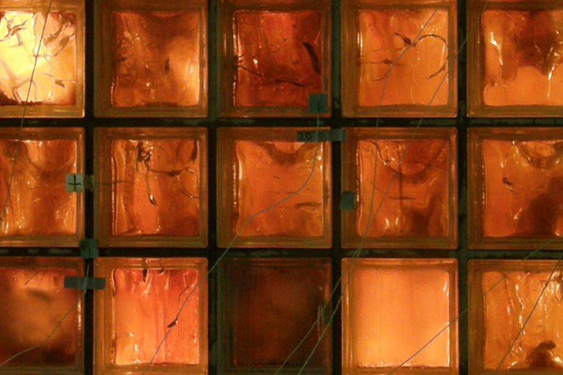 Feuerschein hinter einer Reihe von Glasbausteinen