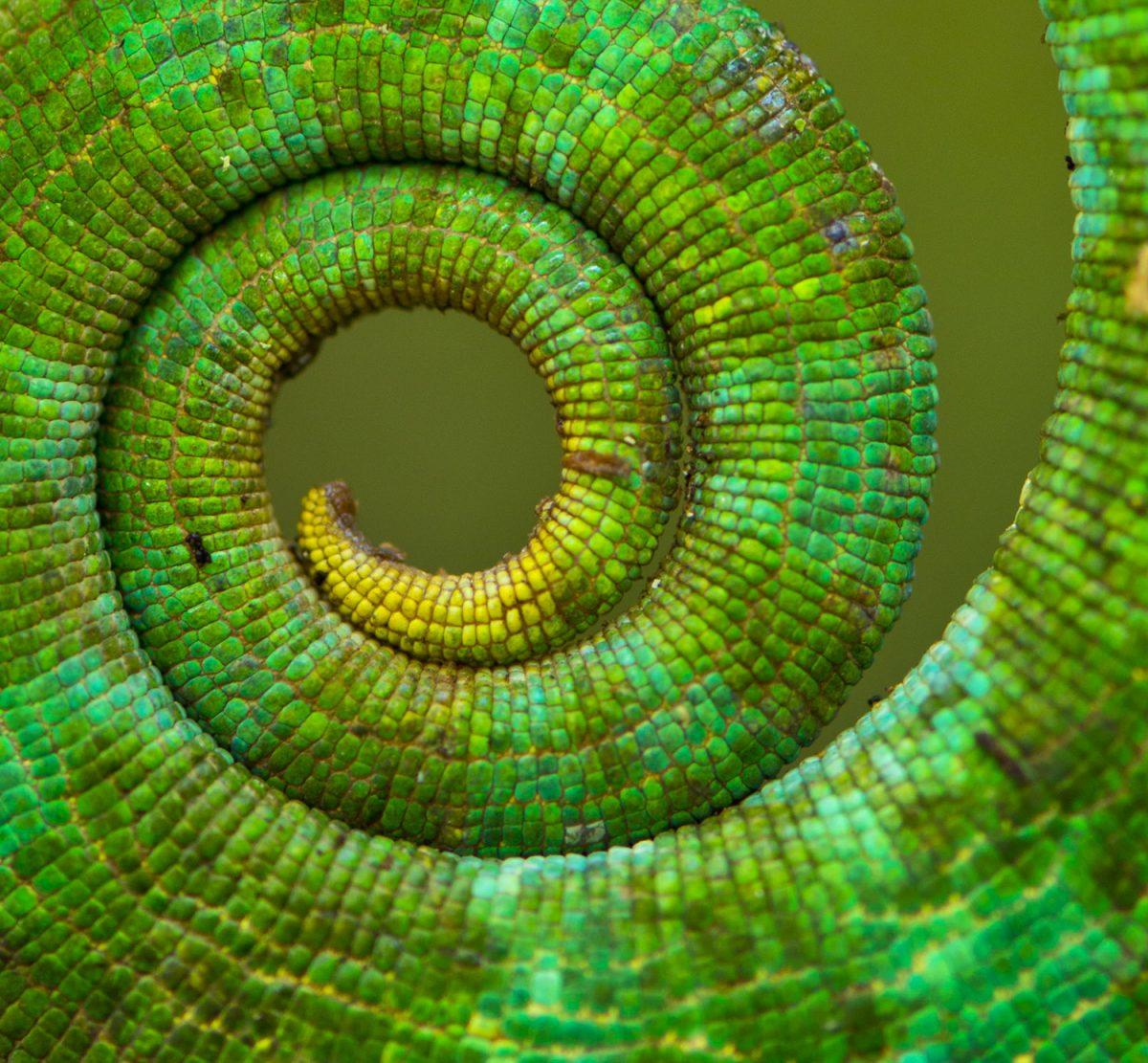 Platz 3: Mark D. Scherz, Abteilung Evolutionsbiologie, Zoologisches Institut