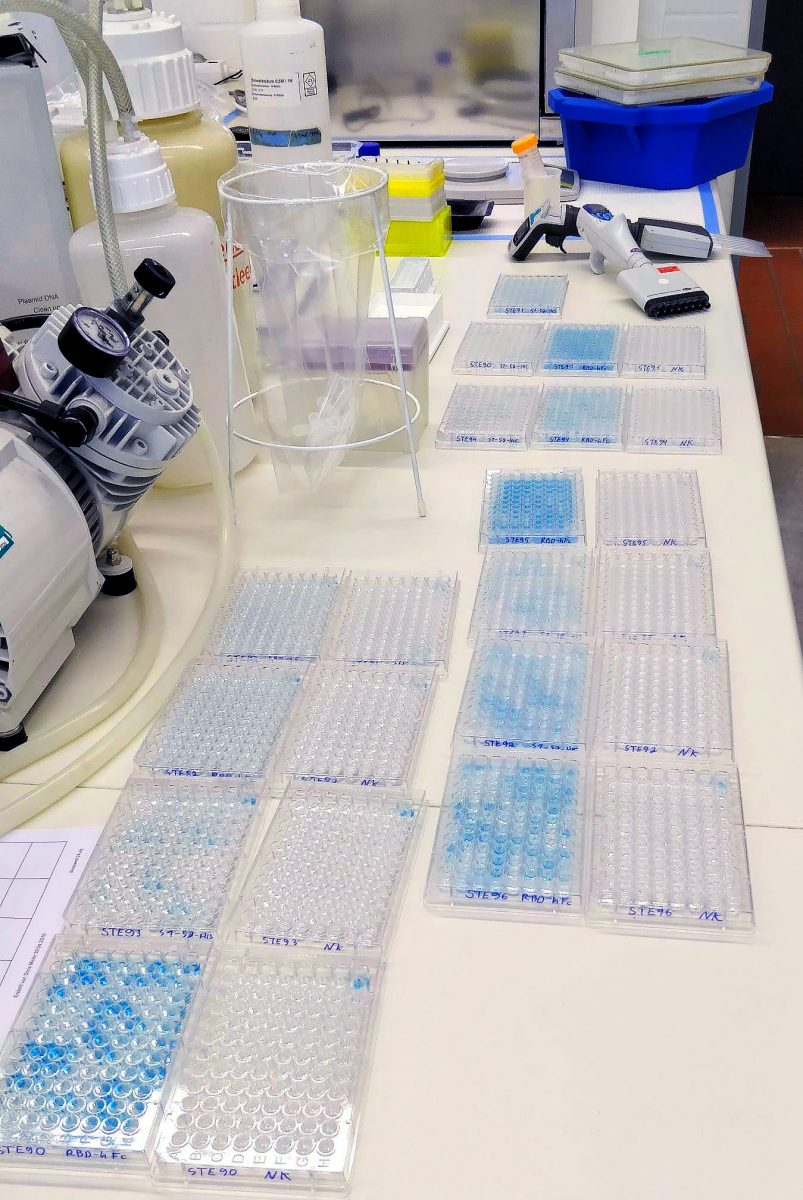 Juni: Erste SARS-CoC-2-Antikörper