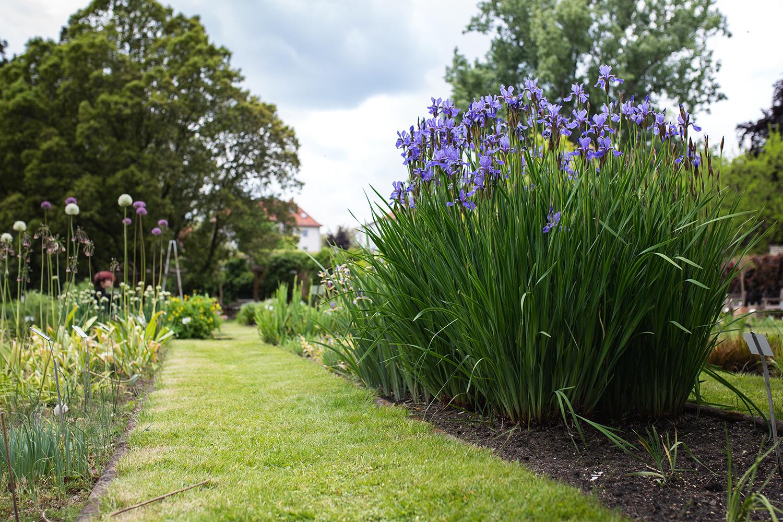 Botanischer Garten Bleibt Bis Auf Weiteres Geschlossen Tu Braunschweig Blogs